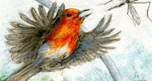 Robin in the polytunnel. Illustration: Michael Viney