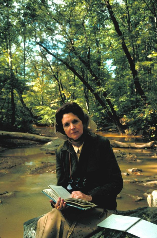 Biologist/author Rachel Carson reading in the woods near her home. (Photograph: Alfred Eisenstaedt/Time Life Pictures/Getty Images