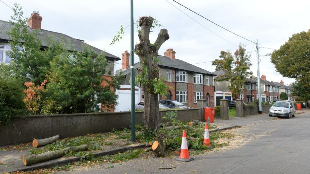 Trees felled on St Canice's Road, Glasnevin, Dublin, on Wednesday. Photograph: Dara Mac Dónaill/The Irish Times
