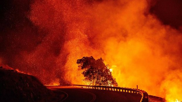 Embers rise above a burning tree along a road during the Kincade Fire near Geyserville, California. Photograph: Josh Edelson/AFP via Getty Images