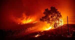 Flames enter a vineyard near Geyserville, California. At its peak, the Tick Fire burning in the Santa Clarita Valley north of Los Angeles forced the evacuation of about 50,000 people. Photograph: Josh Edelson/AFP/Getty Images