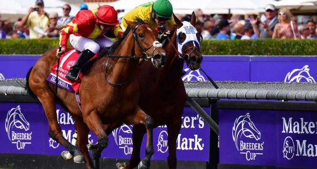 Image result for iridessa breeders cup