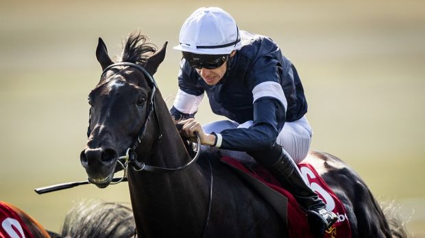 Latrobe is among Joseph O'Brien's four runners in the Melbourne Cup. Photograph: Morgan Treacy/Inpho