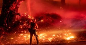 A firefighter douses flames from a backfire during the Maria fire in Santa Paula, California on November 1st. Photograph:  Josh Edelson/AFP