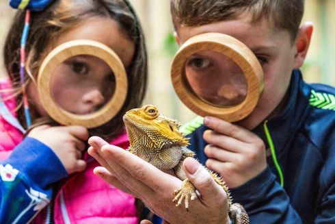 LIZARDS ARE WIZARD: Heidi Hardman and  Cillian Jacob and a lizard at Fota Wildlife Park during the launch of the Cork Science Festival, starting on November 10th. Photograph: Clare Keogh