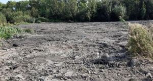 Thousands of creatures were killed during the destruction of an area of wetland in Tallaght in September.