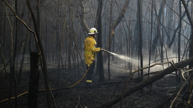 A firefighter works to extinguish smoldering ground after a fire passed through, in South Turramurra, near Sydney, New South Wales. Photograph: EPA/Photograph: EPA//DAN HIMBRECHTS