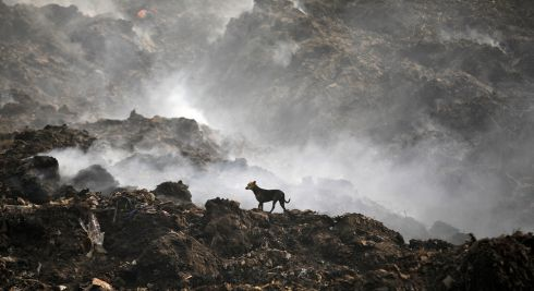 THAT'S RUBBISH: A stray dog looks around as smoke billows from a burning garbage dump on the outskirts of Ahmedabad, India. Photograph: Amit Dave/Reuters