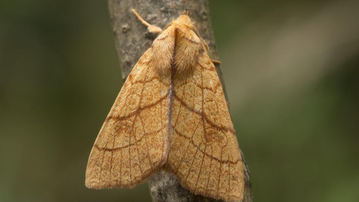 Global warming bringing new species of moths to Ireland