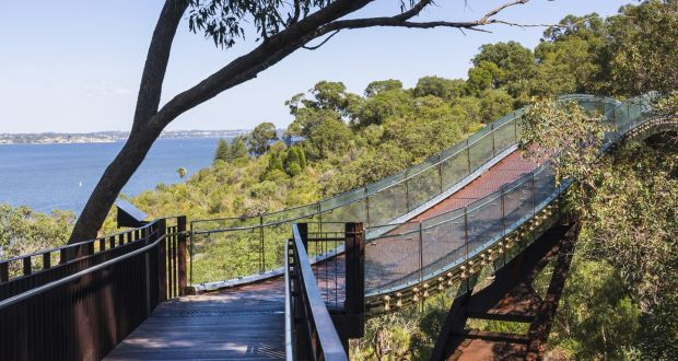 Bridge running through the treetops in Kings Park, Perth, Australia