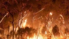 Australian firefighter's video captures trees going up in flames