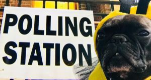 A dog dressed as a bee at a polling station. Photograph: @DaveMcgrath1/PA Wire