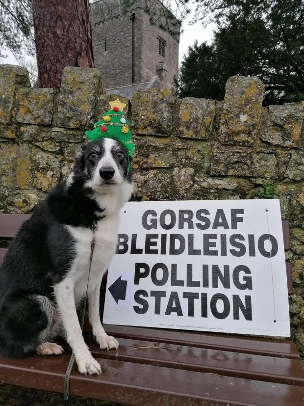 Twm wears a Christmas hat at a polling station in the Vale of Glamorgan, Britain. Photograph: @EsylltMair/PA Wire