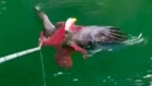 Octopus vs eagle: fishermen intervene in unlikely tussle