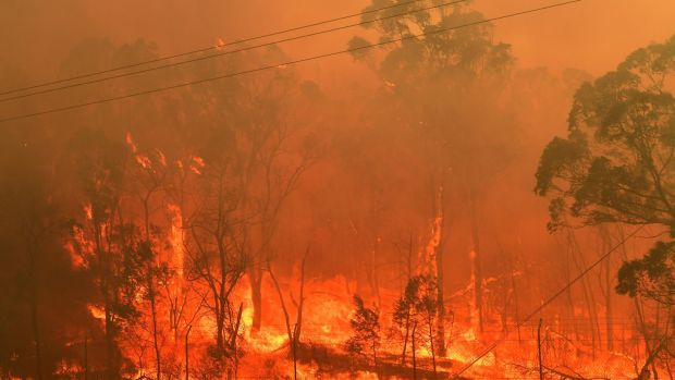 A bushfire burns along the Old Hume Highway near the town of Tahmoor, in New South Wales. Photograph: EPA