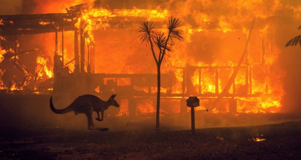 A kangaroo rushes past a burning house in Lake Conjola, Australia, on the last day of 2019.  Since August, nationally the number of lost homes is over 1,200. Photograph: Matthew Abbott/The New York Times