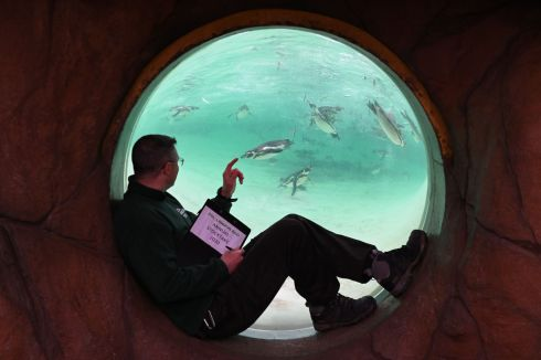 ZOO VIEW: A zookeeper counts penguins through an observation window during the annual stocktake at ZSL London Zoo, England. Photograph: Daniel Leal-Olivas/AFP via Getty Images