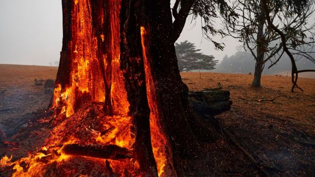 A tree burns from the inside out hours after the fire front had passed in Bundanoon, Australia. on Sunday. A state of emergency is in place across NSW as firefighters work to contain multiple fires. Photograph: Brett Hemmings/Getty Images