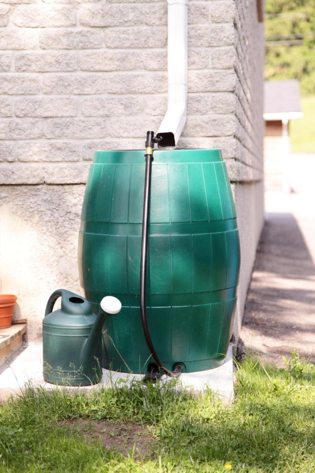 Keep the hose coiled and get a water butt to collect rainwater instead. Make sure to use a watering can with a rose head too. Photograph: Dorin S/Getty Images