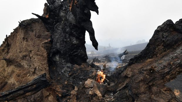 A small fire is seen on a burnt tree on the ground after an overnight bushfire in Quaama in Australia's New South Wales state on Monday. Photograph: Saeed Khan/AFP/Getty Images