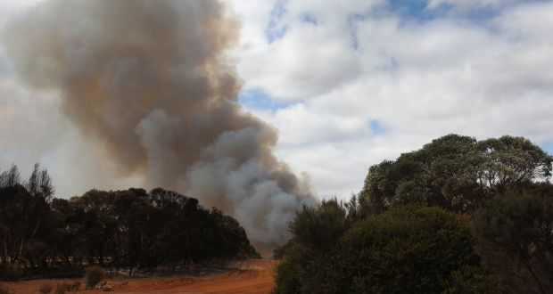 A plume of bushfire smoke rises above Mount Taylor Road bordering local farm land on January 11th, 2020 in Karatta, Australia. Photograph: Lisa Maree Williams/Getty Images