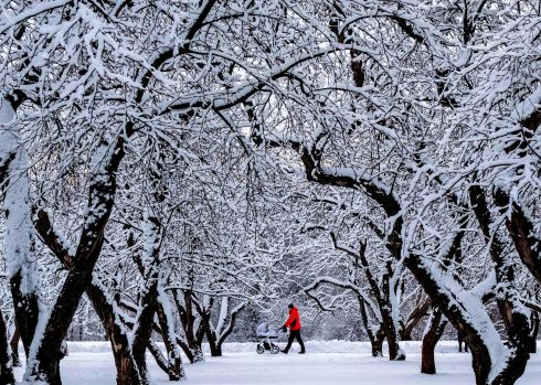WINTER WONDERLAND: A man pushes a pram as he walks through a snow-covered landscape of Kolomenskoye Park in Moscow. Photograph: Yuri Kadobnov/AFP via Getty Images