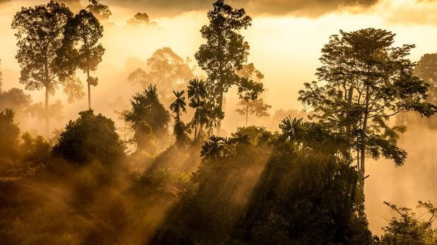 Rainforest Sabah, Malaysia. Photograph: Marcus Westberg/The New York Times