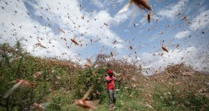 A man chases away a swarm of desert locusts in the bush near Enziu, Kitui County, Kenya, January 24th 2020. Photograph: Dai Kirokawa/EPA