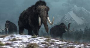 During the last ice age a tundra environment stretched from what is now France to Canada and south to China. This huge habitat included mammoths, woolly rhinoceroses, bison, reindeer, horses, elk and predators including cave lions and wolves