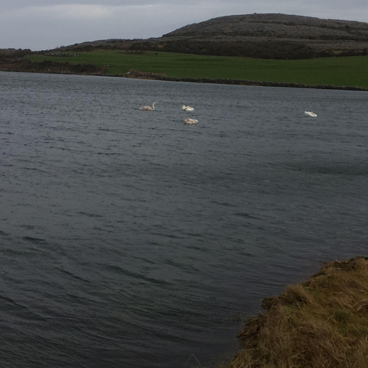 Ennis Weather - Met ireann Forecast for Ennis, Ireland - The