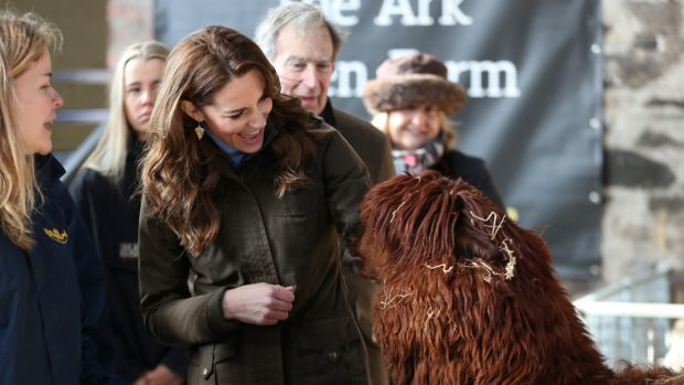 The Duchess of Cambridge looks at an alpaca as she visits the Ark Open Farm in Newtownards. Photograph: Chris Jackson/Reuters