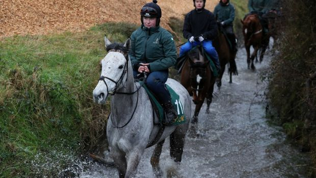Duc Des Genievres during the visit to Willie Mullins' stables in Closutton. Photograph: Brian Lawless/PA Wire