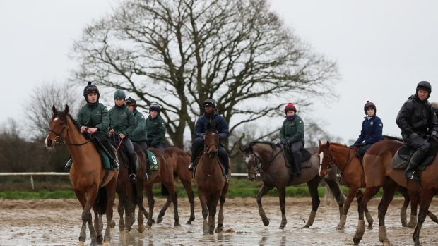 Horses go through their paces during the visit to Willie Mullins' stables in Closutton. Photograph: Brian Lawless/PA Wire