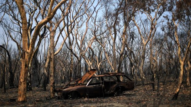 A burnt car among the charred trees in Lithgow, in Australia's New South Wales following the massive bushfires. Photograph: Saeed Khan/AFP