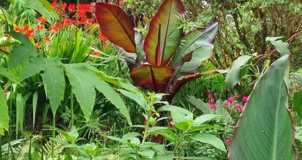 The Secrets To Growing An Exotic Irish Garden