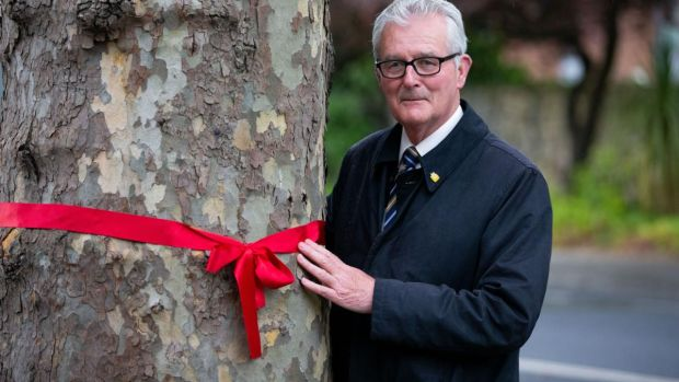 Cllr Paddy McCartan beside a plane tree on Merrion Road. Photograph: Tom Honan