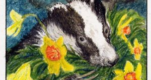 Once a local badger chose to wrench a bunch of leaves and stems from a stand of flowering daffodils.