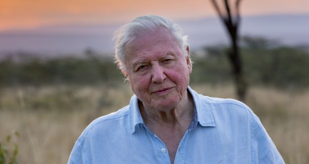 David Attenborough's nature documentaries are calming distractions these days