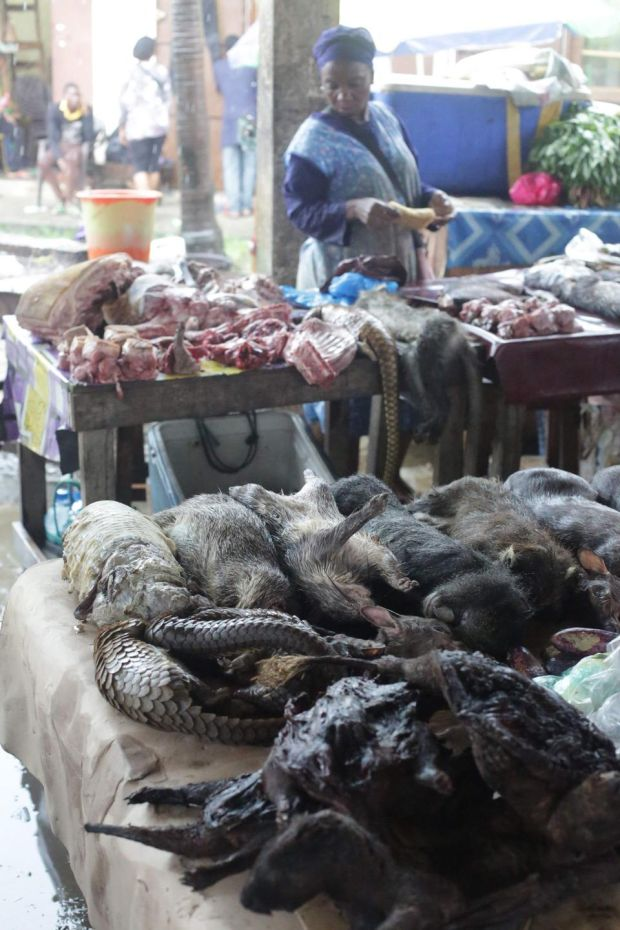 Pangolins and other bushmeat for sale at a market in Libreville Gabon, on March 7th, 2020. Photograph: Getty