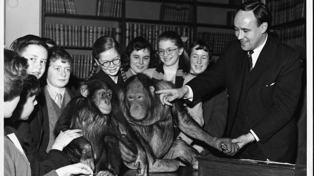 "Desmond Morris: ""I was studying primate behaviour and I realised I needed to look at humans as a species of animal."" Photograph: Hulton-Deutsch Collection/Corbis via Getty"