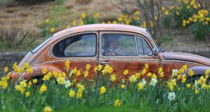 SPRING BEETLE: A vintage Volkswagen Beetle on the N11 near Stillorgan, Co Dublin. Photograph: Nick Bradshaw