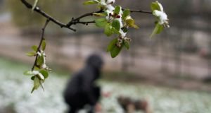 A woman plays with her dog in the  Prenzlauer Berg district of Berlin on March 30th. Photograph: Alexander Becher/EPA
