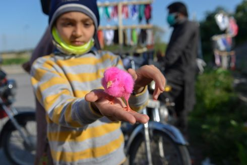 FEELING FABULOUS: A Pakistani child wearing a face mask holds a chick at a roadside stall during a government-imposed nationwide lockdown on the outskirts of Islamabad. Photograph: Farooq Naeem/AFP via Getty Images