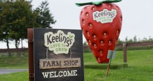 Following an outpouring of concern in the context of Covid-19, Keelings strawberry producer said the 189 seasonal workers also had their temperature checked before entry. Photograph: Alan Betson/The Irish Times