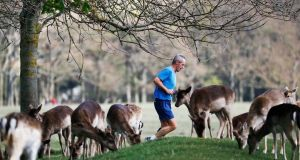 A man jogs past grazing deer in the Phoenix Park in Dublin earlier this month. Photograph: Leon Farrell/Rollingnews.ie