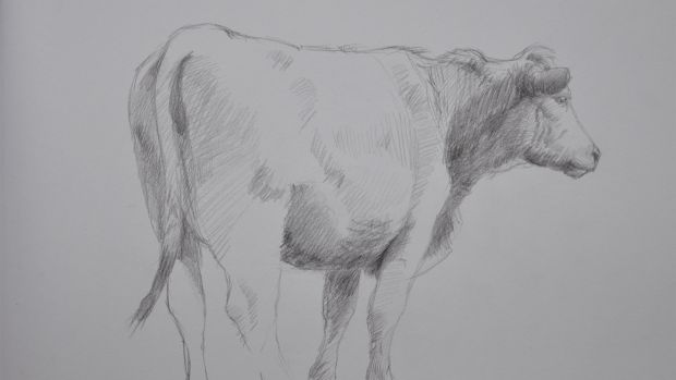 Martin Gale, Bullock (study for 'Visiting'), 29 x 41cm pencil on paper 2007