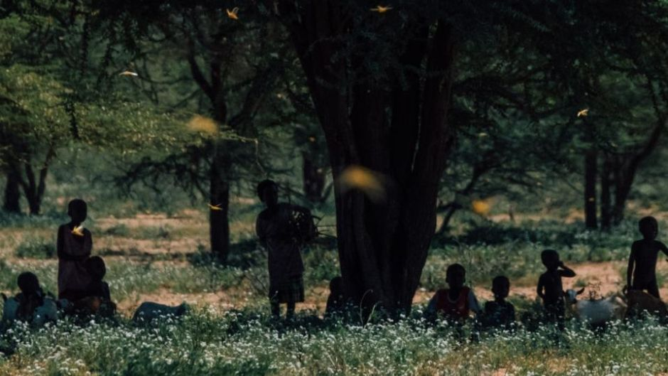People shelter under a tree as locusts take flight in Laisamis, Kenya: swarms are likely to disrupt agricultural production and supply routes, leaving millions hungry. Photograph: Khadija Farah/New York Times
