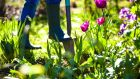 May is one of the busiest months of the Irish gardening year, a time to sow and plant many kinds of vegetables, herbs and ornamentals.  Getty
