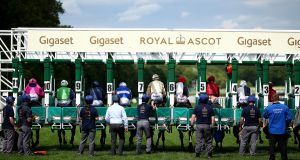 Runners and riders being guided into the  starting stalls by stall handlers at Royal Ascot. Photograph:  Charlie Crowhurst/Getty Images