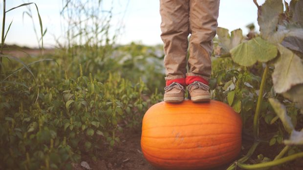 Pumpkins are yet another colourful, fun and fast-growing vegetable easily raised from seed. Photograph: Getty